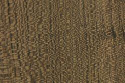 Louro preto (Cordia curassavica)