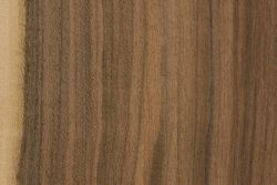 Louro preto (Cordia meglantha)