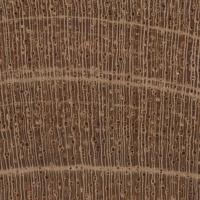 Cuban Mahogany (endgrain 10x)