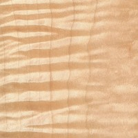 Curly Maple (sealed)
