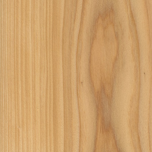 Softwood Trees In Florida ~ Cypress the wood database lumber identification softwood