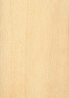 Eastern Cottonwood (Populus deltoides)