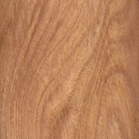 English Elm (sealed)