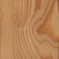 European Larch (sealed)
