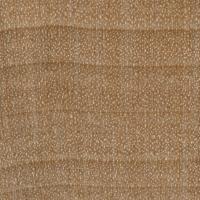 Field Maple (endgrain 10x)