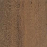 Anjan (Hardwickia binata)