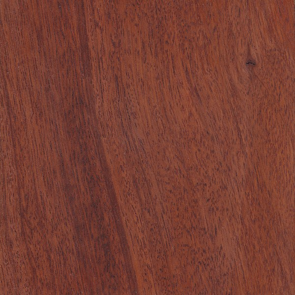 Jarrah The Wood Database Lumber Identification Hardwood