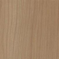 Kauri (Agathis australis)