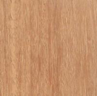 Kempas (Koompassia malaccensis)