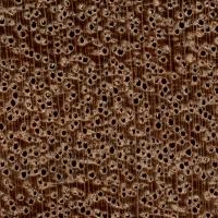 Keruing (endgrain 10x)