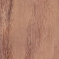 Koa (Acacia koa)