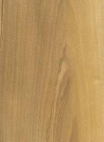Lancewood (Oxandra lanceolata)