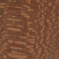 Leopardwood (Roupala spp.)