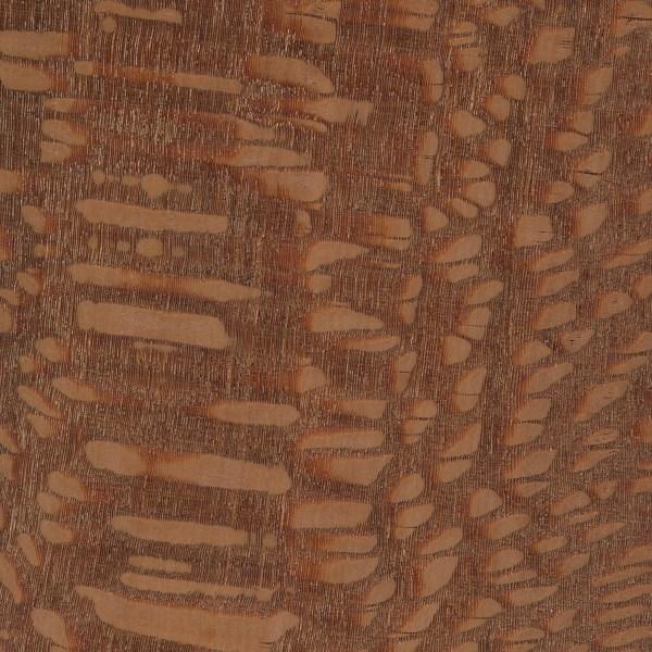 uusin kokoelma myynti uusi aito Leopardwood | The Wood Database - Lumber Identification ...