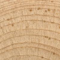 Limber Pine (endgrain 10x)