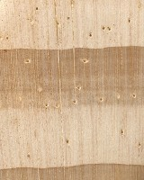 Lodgepole Pine (endgrain 10x)