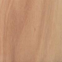 Lyptus (Eucalyptus urograndis)