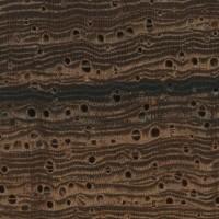 Madagascar Rosewood (endgrain 10x)