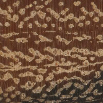 Marblewood (endgrain 10x)