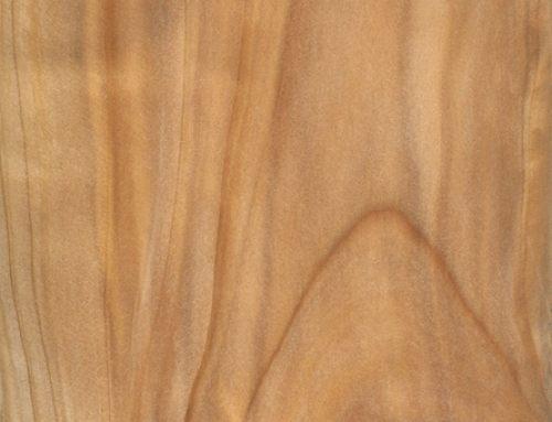 Mediterranen Cypress