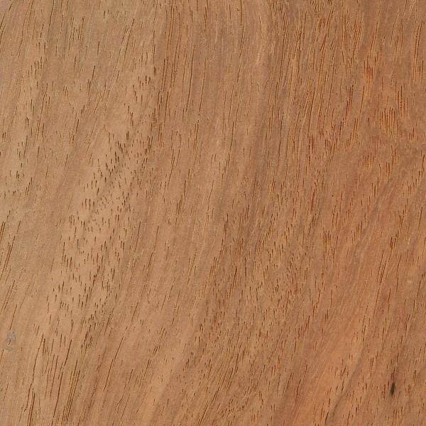 Narra (Pterocarpus indicus)