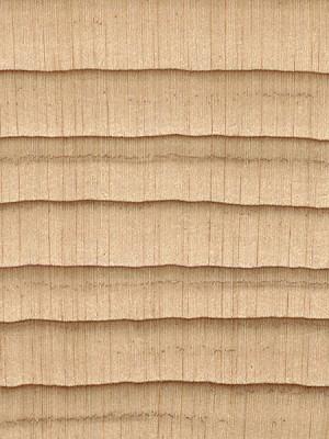 Northern White Cedar (endgrain 10x)