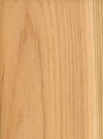 Northern White Cedar (sealed)