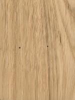 Overcup Oak (Quercus lyrata)