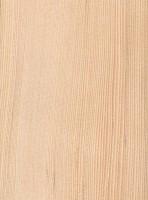 Pacific Silver Fir (Abies amabilis)