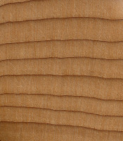 Pacific Yew (endgrain 10x)