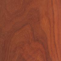 Padauk (Pterocarpus soyauxii)