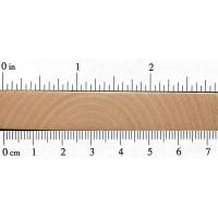Paper Birch (endgrain)