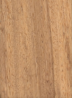 Partridgewood (Andira inermis)