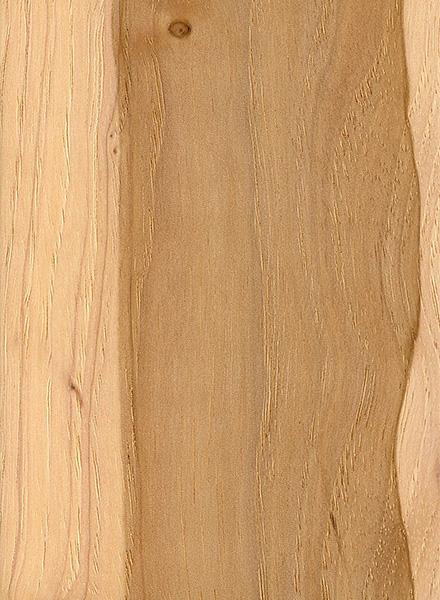 pecan the wood database lumber identification (hardwood)pecan