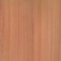 Peroba Rosa (Aspidosperma polyneuron)