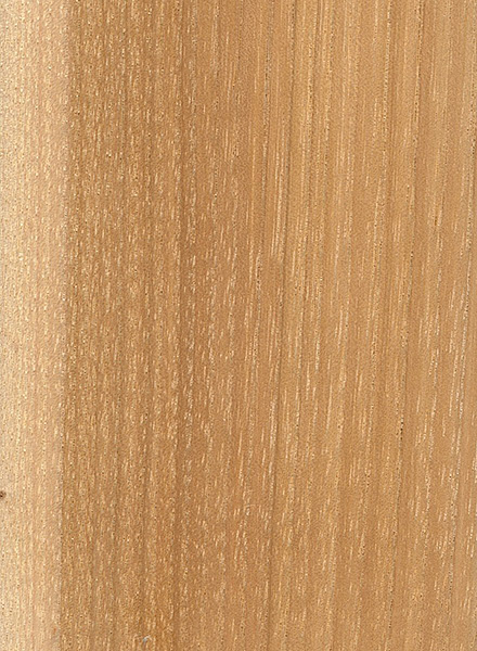 Pignut Hickory (Carya glabra)