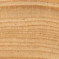Pinyon Pine (endgrain 10x)