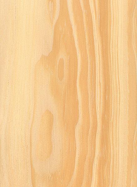 Pinyon Pine (Pinus edulis)