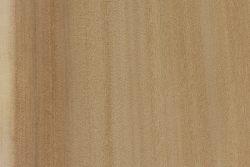 Fremont poplar (Populus fremontii)