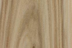 Swamp cottonwood (Populus heterophylla)