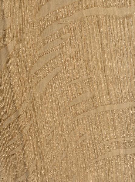 Post Oak (Quercus stellata)