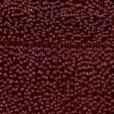 Purpleheart (endgrain 10x)