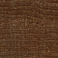 Pyinma (endgrain 10x)