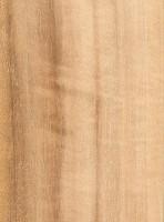 Queensland Maple (Flindersia brayleyana)