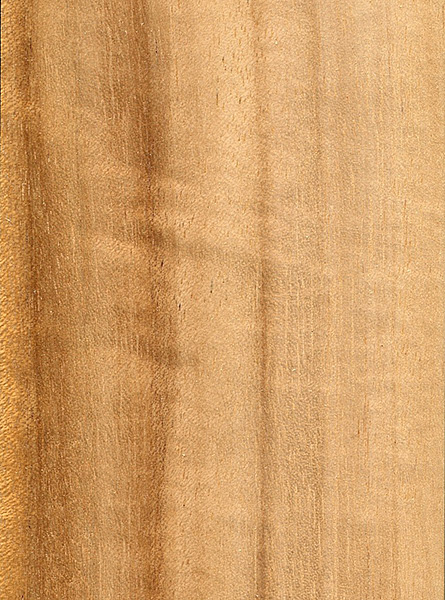 Queensland Maple The Wood Database Lumber