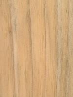 Radiata Pine (Pinus radiata)