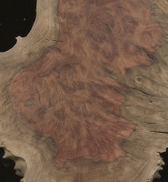 Red Mallee burl (Eucalyptus spp.)