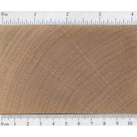 Red Oak (endgrain)
