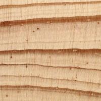 Sand Pine (endgrain 10x)