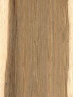 Shellbark Hickory (Carya laciniosa)
